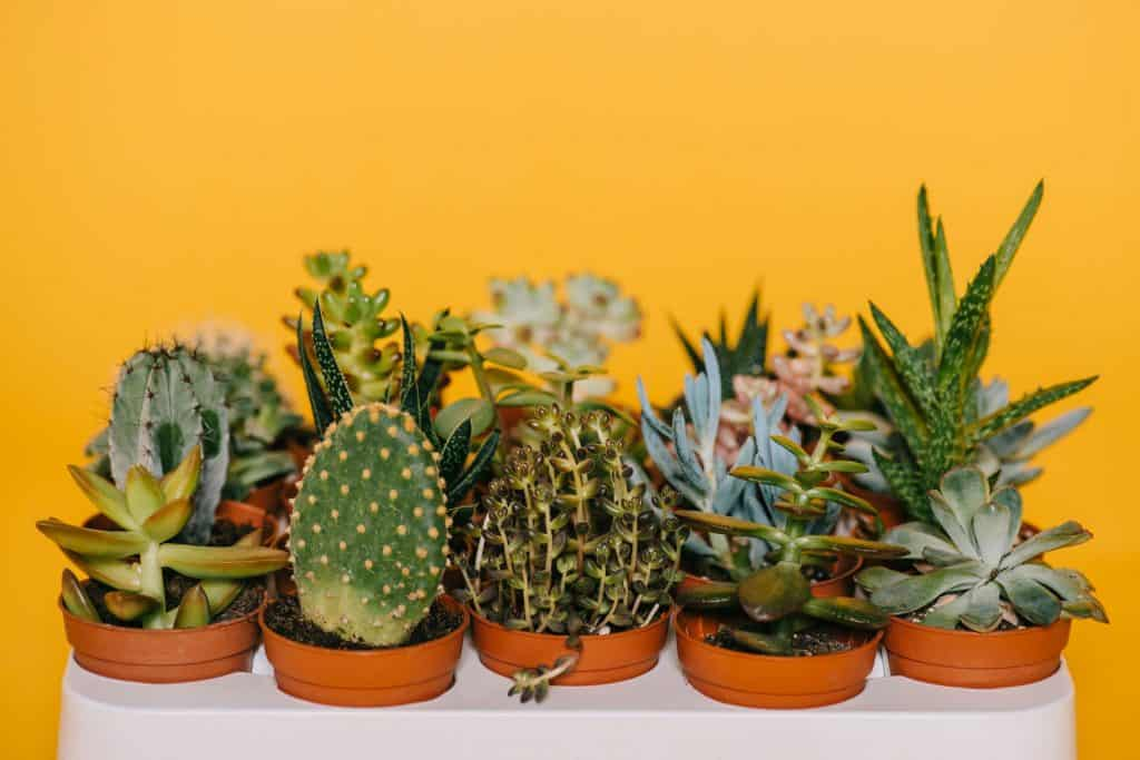 Cacti and succulents are perfect plants for garden offices