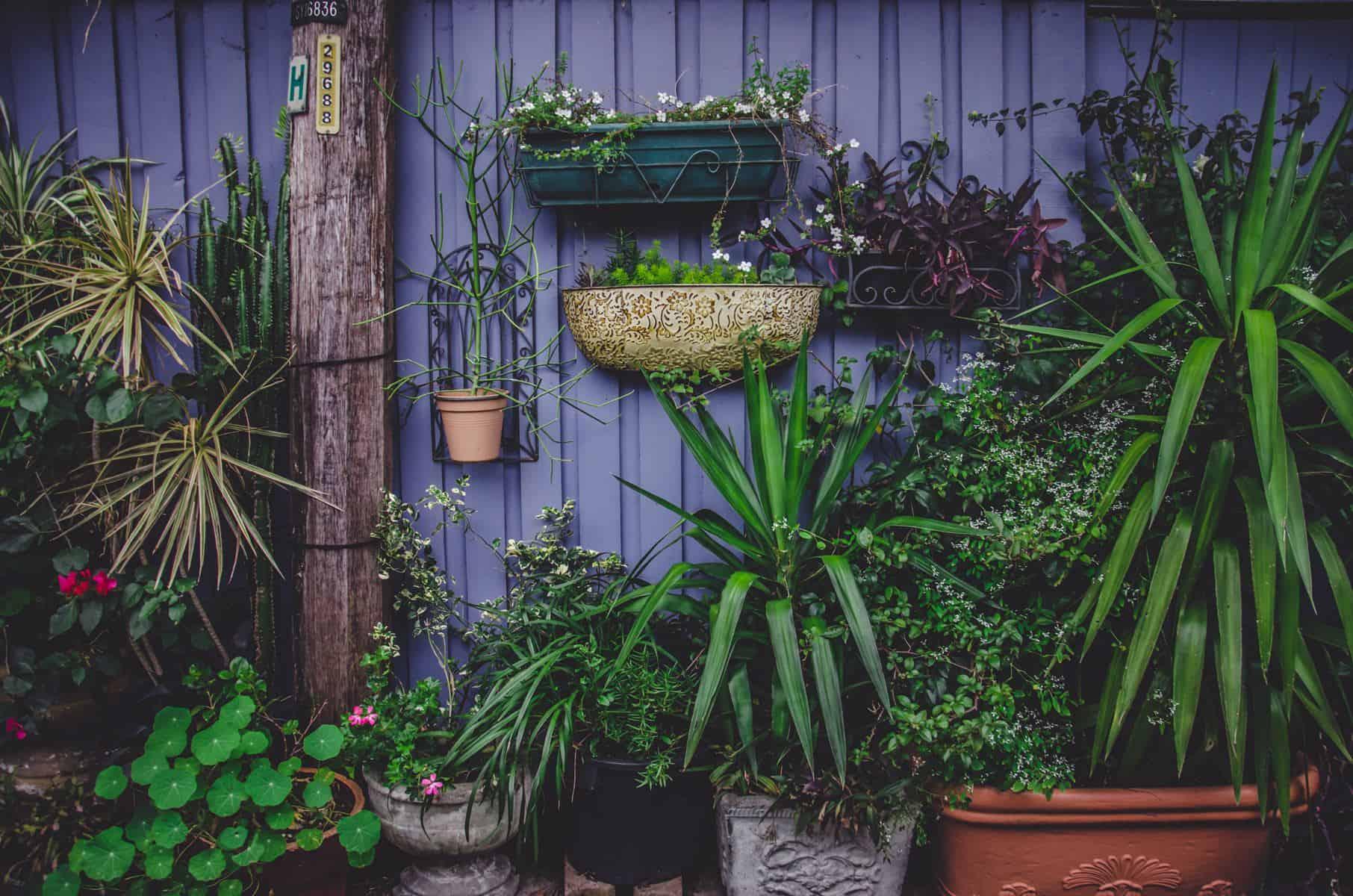 garden trends for 2020