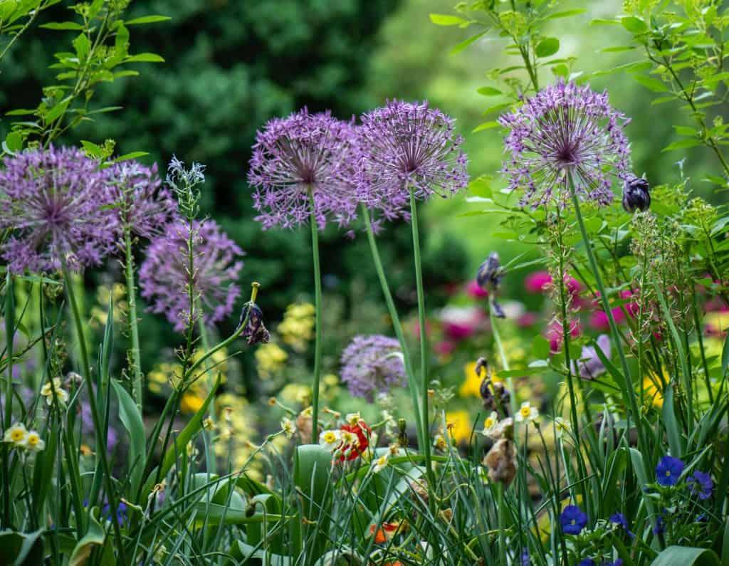 your garden in bloom