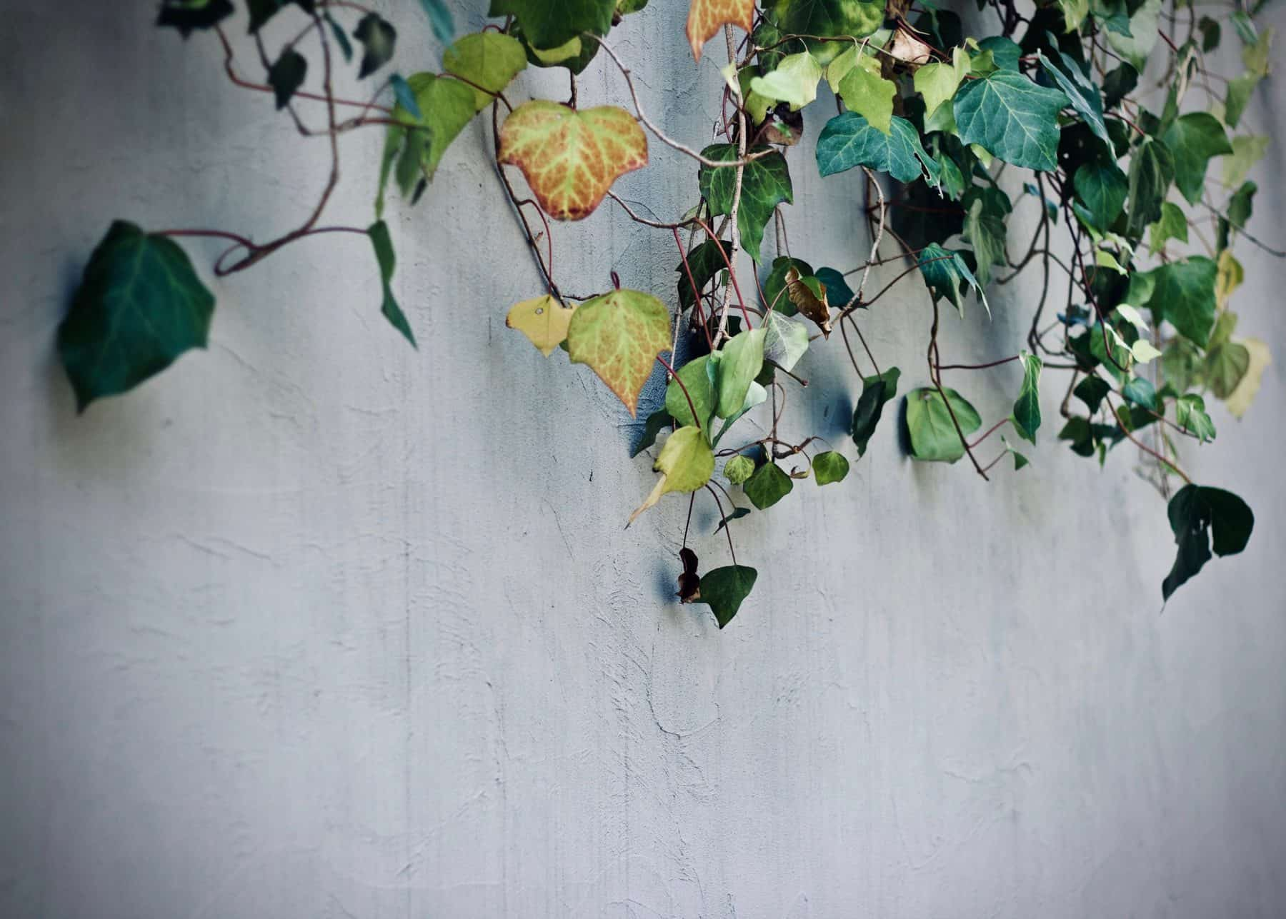 7 Climbing Plants That Could Transform The Look of Your Garden Cabin