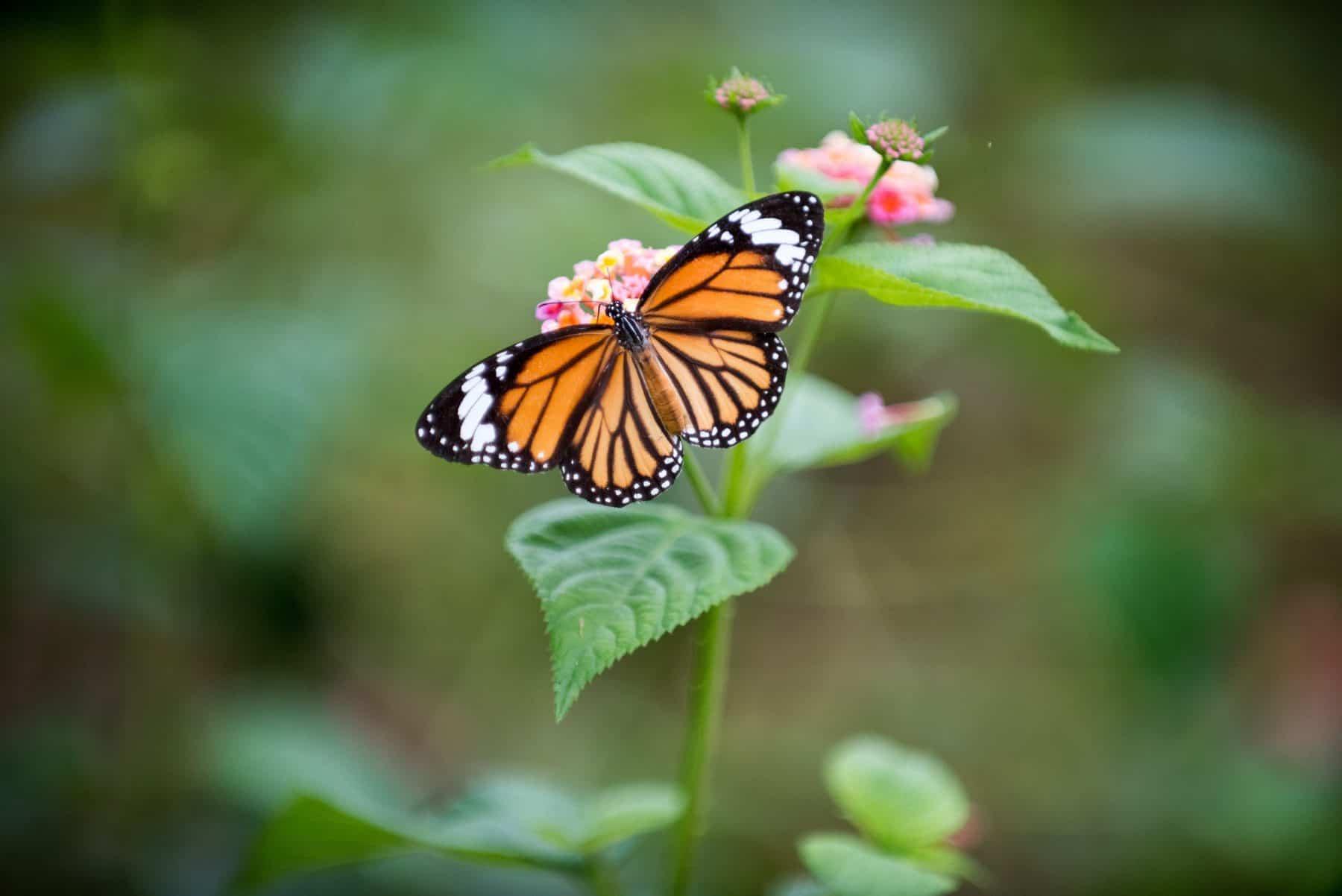 make your garden a wildlife hub (2)