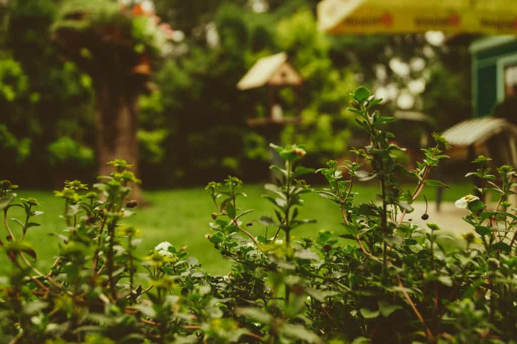 turfing your lawn