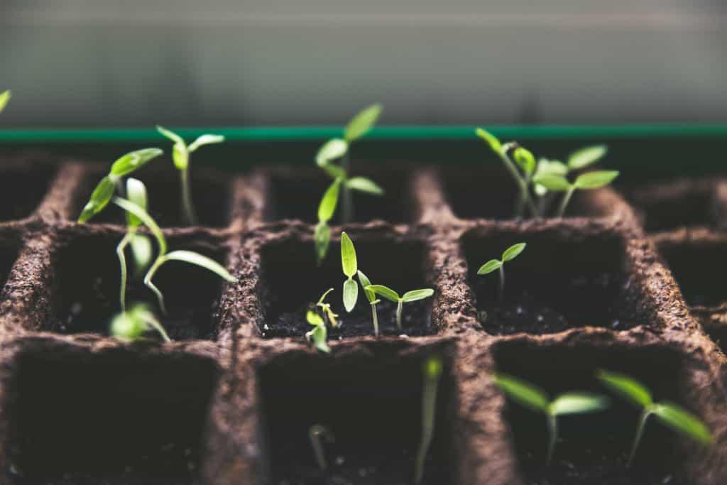 Gardening Jobs For The Spring