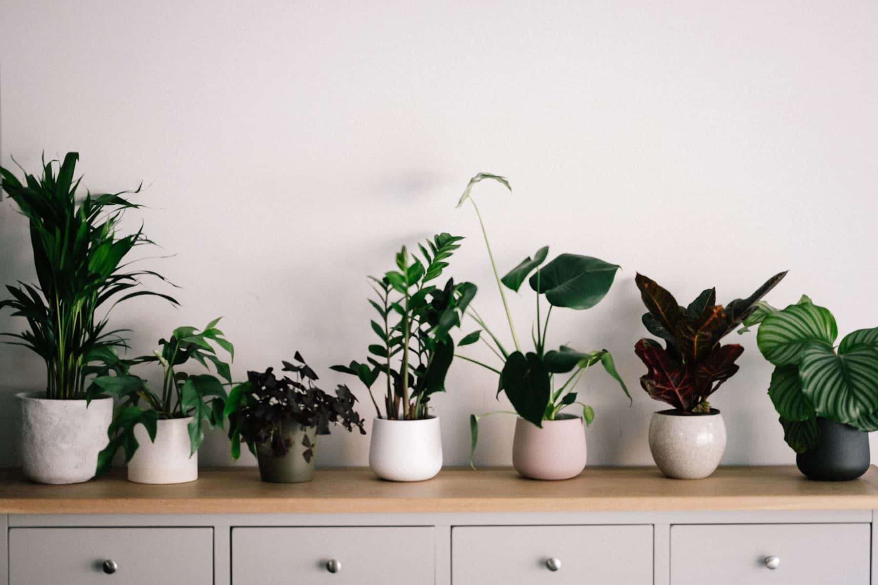 plants for your garden room