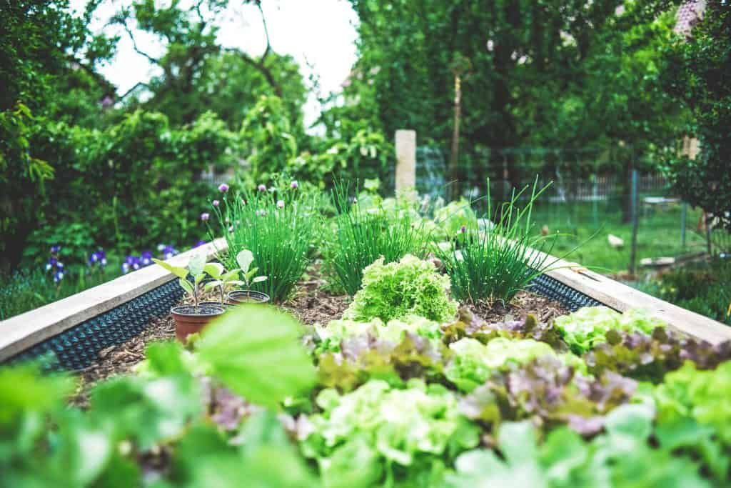 Tips for Creating a Family Friendly Garden During Lockdown