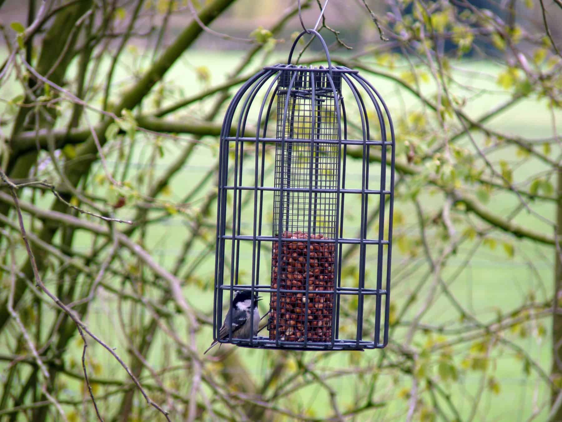 Get back to nature this spring Birdwatching from your garden shed room