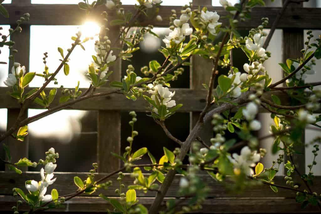 Beautify Your Garden Room Exterior