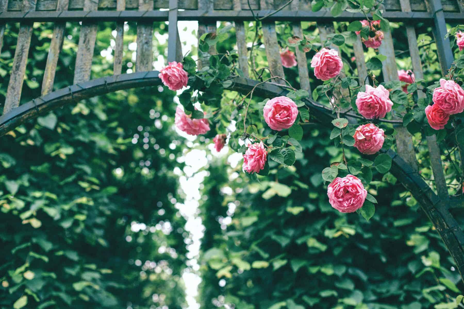 Beautify Your Garden Room Exterior (2)